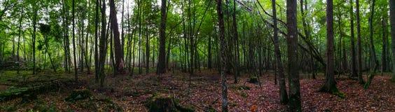 Por do sol de Atumnal na floresta Foto de Stock