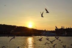Por do sol de Barcelona do porto Fotos de Stock
