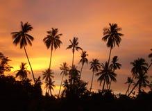 Por do sol de Bornéu Fotografia de Stock Royalty Free
