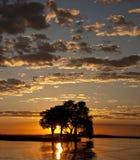 Por do sol de Botswana fotografia de stock royalty free