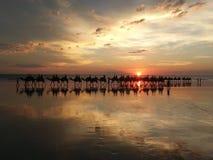 Por do sol de Broome com camelos Fotos de Stock