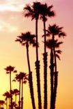 Por do sol de Califórnia foto de stock royalty free