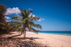 Por do sol de Caribe Imagem de Stock