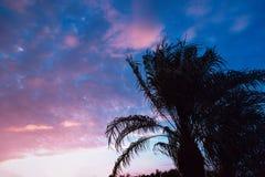 Por do sol de Florida com uma silhueta da palmeira imagem de stock