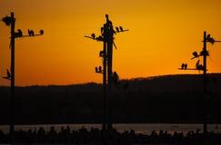 Por do sol de Ganets Fotografia de Stock