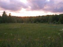 Por do sol de junho sobre a floresta e o campo Foto de Stock