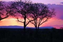 Por do sol de Kruger Fotos de Stock