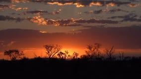 Por do sol de Kruger Foto de Stock