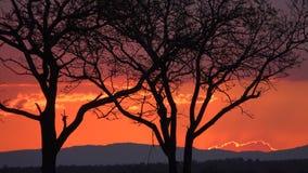 Por do sol de Kruger Imagem de Stock