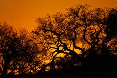 Por do sol de Kruger Fotografia de Stock Royalty Free