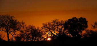 Por do sol de Kruger Fotografia de Stock