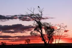 Por do sol de Mallee Foto de Stock Royalty Free