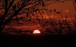 Por do sol de Midwest Fotografia de Stock