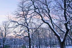 Por do sol de novembro no parque da cidade Foto de Stock