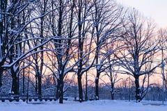 Por do sol de novembro no parque da cidade Foto de Stock Royalty Free