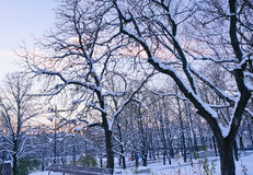 Por do sol de novembro no parque da cidade Imagem de Stock Royalty Free