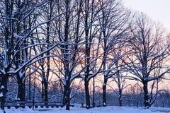 Por do sol de novembro no parque da cidade Imagens de Stock Royalty Free