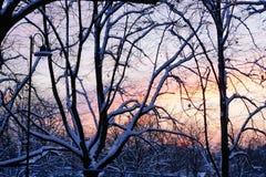 Por do sol de novembro no parque da cidade Fotos de Stock Royalty Free