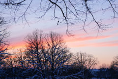 Por do sol de novembro no parque da cidade Imagens de Stock