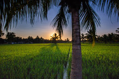 Por do sol de Palmtree Fotografia de Stock Royalty Free