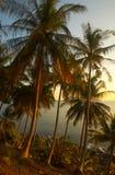 Por do sol de Tropicana Imagem de Stock