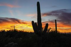 Por do sol do deserto com silhuetas dos cactos fotografia de stock