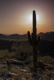 Por do sol do cacto Fotografia de Stock