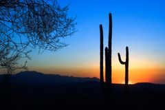 Por do sol do cacto do Saguaro Fotos de Stock Royalty Free
