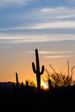 Por do sol do cacto do Saguaro Fotografia de Stock