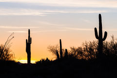 Por do sol do cacto do Saguaro Fotografia de Stock Royalty Free