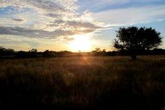 Por do sol do campo Fotos de Stock Royalty Free