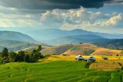 Por do sol do campo de milho de Tailândia Fotos de Stock