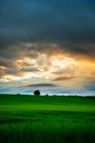 Por do sol do campo de trigo de Escócia foto de stock