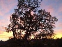 Por do sol do carvalho Foto de Stock