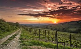 Por do sol do Chianti Fotografia de Stock Royalty Free