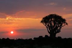 Por do sol do deserto Fotografia de Stock Royalty Free