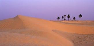 Por do sol do deserto Fotografia de Stock