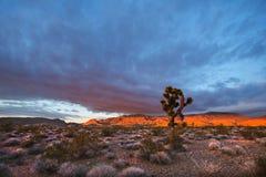 Por do sol do deserto Imagens de Stock Royalty Free
