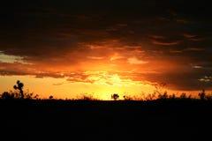 Por do sol do deserto de Mojave Imagens de Stock Royalty Free