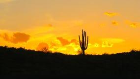 Por do sol do deserto do Arizona imagens de stock royalty free