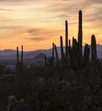 Por do sol do deserto no Arizona imagem de stock