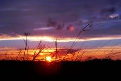 Por do sol do Hedgerow Imagens de Stock