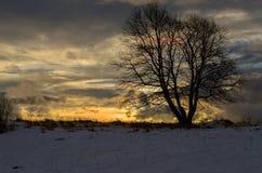 Por do sol do inverno Imagem de Stock Royalty Free