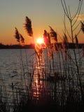 Por do sol do inverno Fotos de Stock