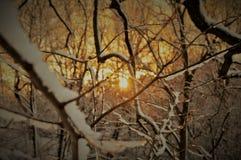 Por do sol do inverno Foto de Stock