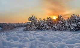 Por do sol do inverno em um fundo da floresta da neve Imagem de Stock