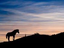Por do sol do pônei de Exmoor, Devon, Reino Unido Foto de Stock Royalty Free