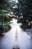 Por do sol do parque fora do bokeh do foco Imagem de Stock