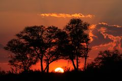Por do sol do Savanna, África do Sul Imagens de Stock Royalty Free