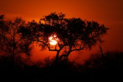 Por do sol do Savanna, parque de Kruger, África do Sul Foto de Stock